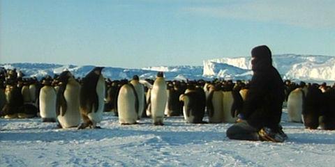 «Der Kongress der Pinguine»